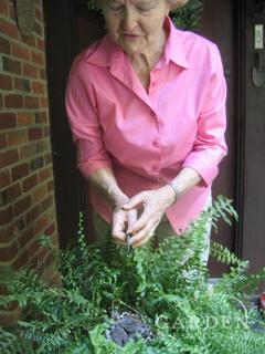 Norie showing baby birds in her garden