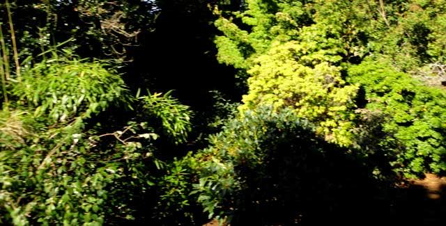 Schlador Garden Before