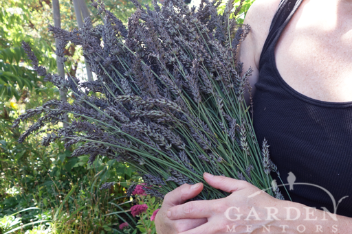 Pruned Lavender Harvest Bundle