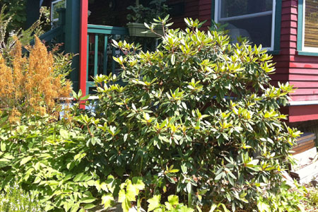 Often the sign of a good pruner is you can hardly tell they've cut anything from your plants.