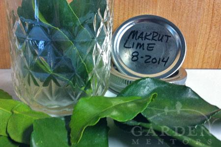 Makrut Lime Leaf Preservation