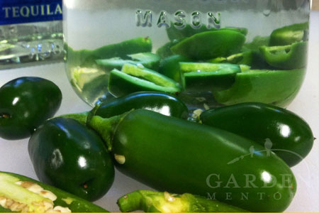 Jalapeno infused Tequila preparation