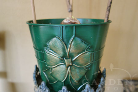 Recycled Amaryllis container
