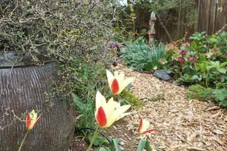 arborist chip path in garden