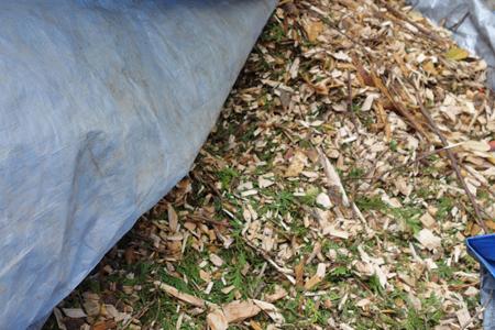 arborist chip on tarp