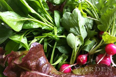 spinach, radish & lettuce leafy greens