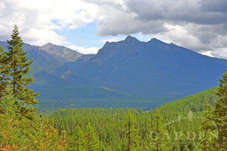 Kootenai Forest in Montana