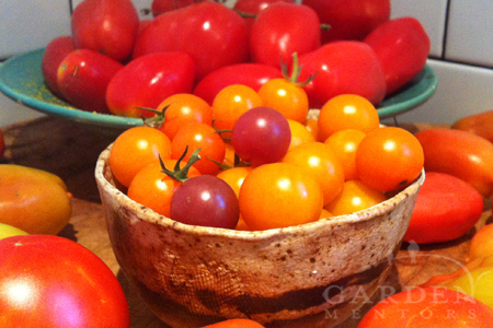 Assortment of best tomatoes to grow