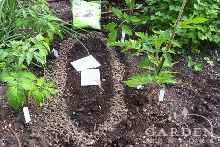 Slug Gone in vegetable garden