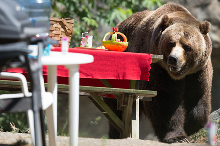 Bear picnic by Jeremy Dwyer-Lindgren & Woodland Park Zoo
