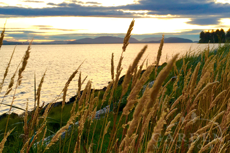 Padilla Bay sunset in July