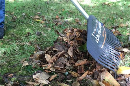 Leaves make great compost material