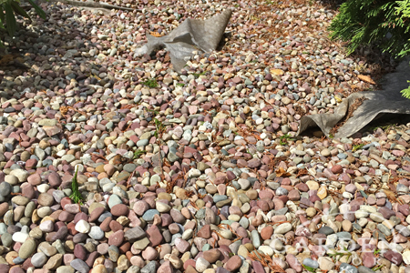 Mixed pink round pebbles