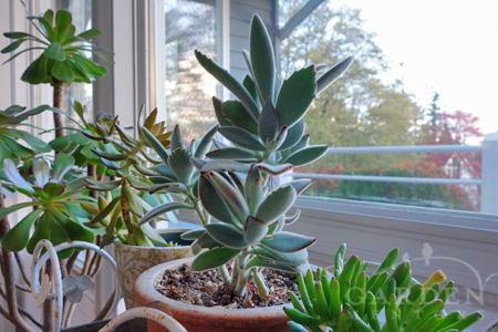 houseplants in solarium