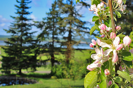 Bay view from the orchard in spring