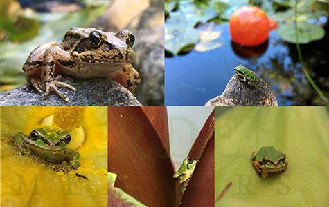 5-card frog set